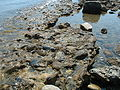 Messina Straits Beach Rock 2.jpg