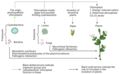 Microorganisms that contribute to plant function.webp