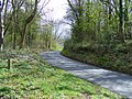 Middle Wood Road - geograph.org.uk - 1248431.jpg
