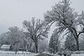 Midpines, California during the winter.jpg