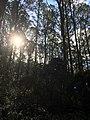 Monga National Park sunlight.jpg