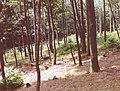 Montagne des singes (Kintzheim) (2).jpg