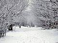 Monte Beigua - neve sulla via della preghiera - panoramio.jpg