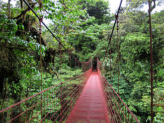 Tropical rainforest - Canopy walkway for seeing the diverse tropical forest in Costa Rica