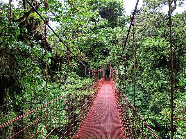 Puente entre el dosel arbóreo de la Reserva biológica Bosque Nuboso Monteverde, Costa Rica.