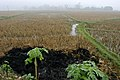 Morning landscape -- the black foreground is the burned rice stubble. (4115405564).jpg