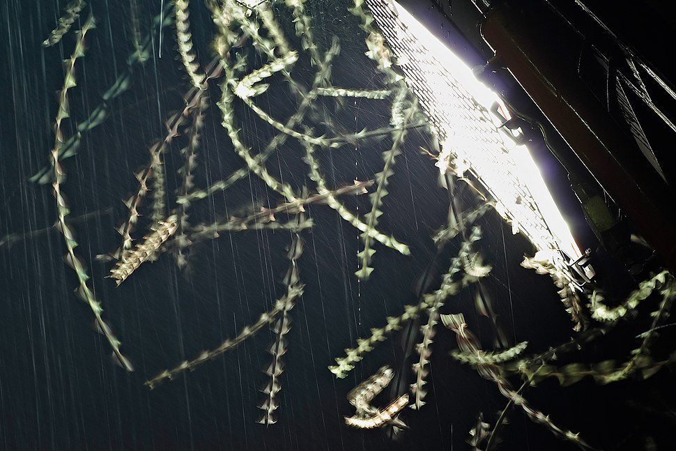 Moths attracted by floodlight