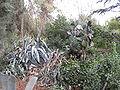 Mount Herzl IMG 1157.JPG