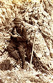 Mountaineer 1898.jpg