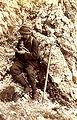 Mountaineer 1898.jpg