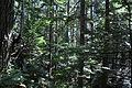 Mt. Walker Trail 04.jpg