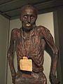 Mummia di Gaetano Arrighi.jpg