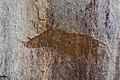 Murewa rock paintings (21).jpg