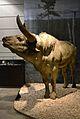 Museu de la Valltorta, reproducció a escala natural d'un ur.JPG