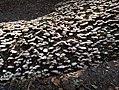 Mushrooms on tree trunk.jpg