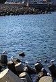 Muttrah-Muscat مطرح، مسقط 32 (cropped).jpg