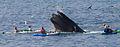 My Whale Captures (7846805436).jpg