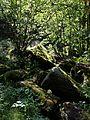 NÖ-Naturdenkmal ZT-121 Talabschnitt des Kleinen Kamp mit Schütt sl4.jpg