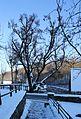 ND Hammerlinde in Frohnauer Hammer in Sachsen... IMG 2171WI.jpg