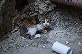 Nablus Street Kitten Victor Grigas 2011 -1-83.jpg