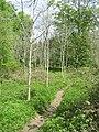 Narrow woodland path - geograph.org.uk - 1672190.jpg
