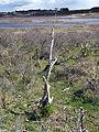 Nationaal Park Zuid-Kennemerland pic14.JPG