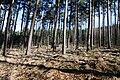 Natural monument Rysovy (2).JPG