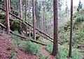 Nature reserve Pavlinino udoli (005).jpg