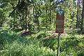 Naturschutzgebiet Trunnenmoor IMG 2659.jpg