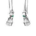 Navicular bone13.png