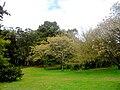 Necochea Parque Miguel Lillo Buenos Aires Argentina.JPG