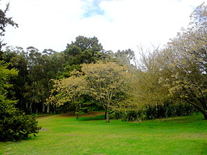 Maritime forest - Miguel Lillo Park, a maritime forest nature preserve in Necochea, Argentina.