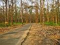 Nedumkayam Forest, nilambur - panoramio.jpg