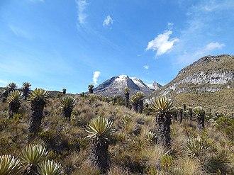Los Nevados National Natural Park - Image: Nevado del tolima y sus frailejones