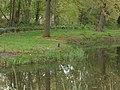 Nieuw Leeuwenhorst - Aalscholver (Phalacrocorax carboa).jpg