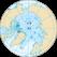 Nordpole.png