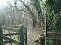 North Downs Way - geograph.org.uk - 1706214.jpg