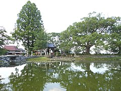 Nuinoike Pond and Shrine, trees front.jpg