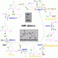 Nukleotiidi süntees2.png