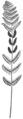 OFH-018 Osmunda claytoniana fertile frond.png