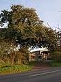 Oak tree and farm buildings at Congdon's Shop - geograph.org.uk - 589101.jpg