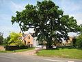 Oak tree in Flyford Flavell.jpg