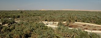 Siwa Oasis - The Siwa Oasis is vast, extending beyond the horizon