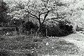 Oishi, Nada Ward, Kobe, Hyogo Prefecture 657-0000, Japan - panoramio (1).jpg