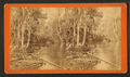 Oklawaha River, Florida. Palmetto Landing, looking down, from Robert N. Dennis collection of stereoscopic views.png