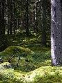 Old Forest by Birgitan Polku - panoramio.jpg