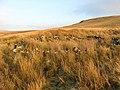 Old sheepfold - geograph.org.uk - 634739.jpg