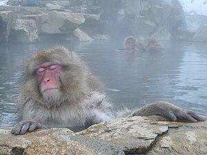 Onsen Monkey.JPG