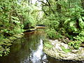 Oparara Basin the River from the footbridge Downstream.JPG
