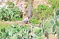 Opuntia ficus-indica (10.3897-zookeys.812.30937) Figure 4.jpg